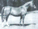 1960 British Supreme National Champion Mare