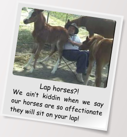 Lap horses?! We ain't kiddin when we say our horses are so affectionate they will sit on your lap!