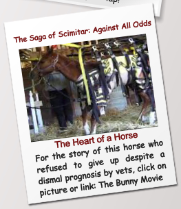 The Saga of Scimitar: Against All Odds The Heart of a Horse For the story of this horse who refused to give up despite a dismal prognosis by vets, click on picture or link: The Bunny Movie